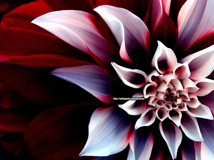 flowers_172 (700x525, 126Kb)