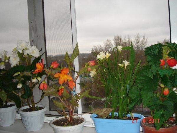цветы на подоконнике (600x450, 56Kb)