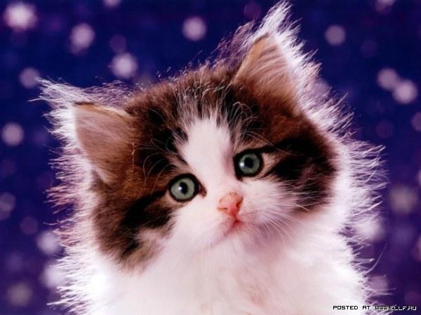 3589298_1212112894_cat_07 (600x450, 57Kb)