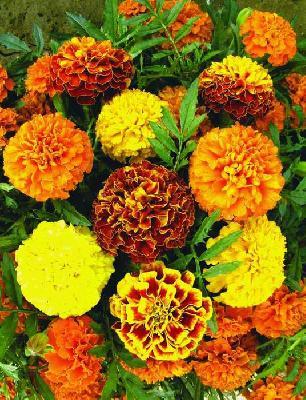 Композиция цветов в огороде фото