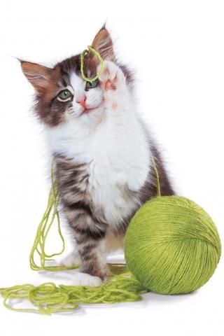 Cat_-_Order (320x480, 94Kb)