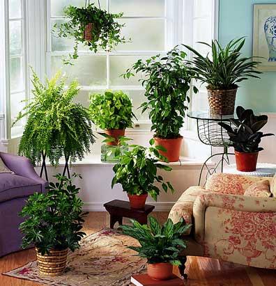 полив домашних растений/4171694_houseplants (396x411, 39Kb)
