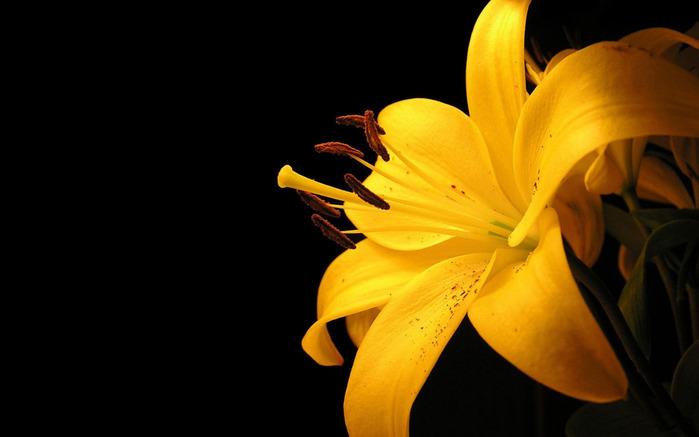 flower (700x437, 56Kb)