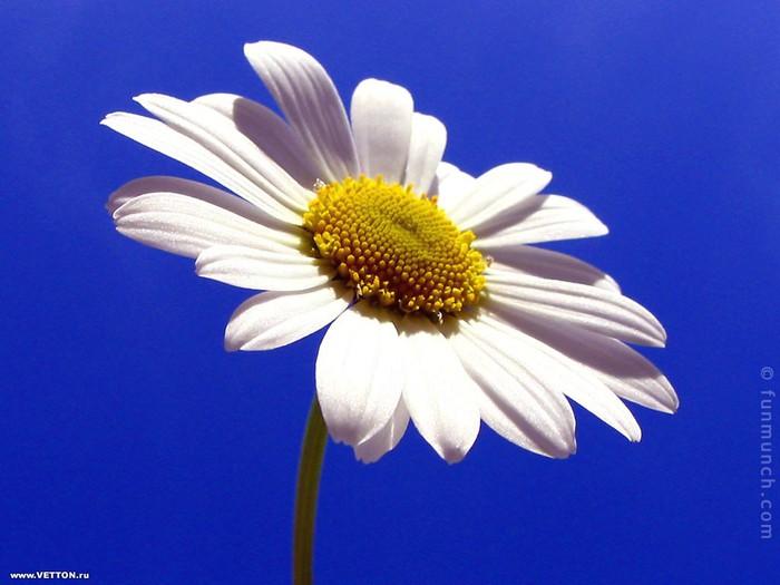 flowers_ru_143 (700x525, 71Kb)