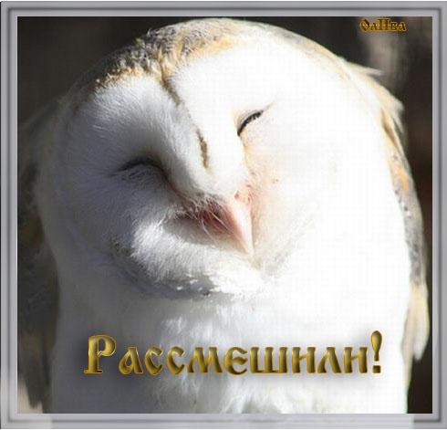 рассмешили-сова (490x471, 69Kb)