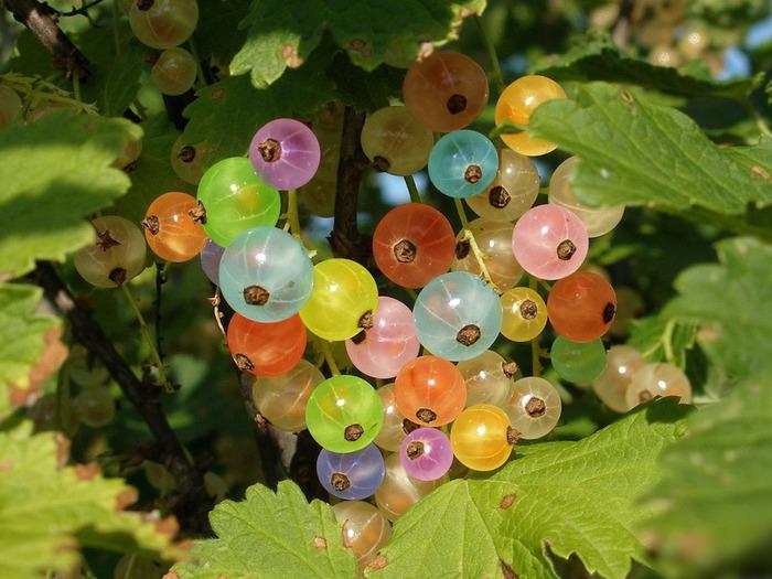 О болезнях фруктовых деревьев и их лечение доступными методами вы узнаете из предложенного ниже материала возбудитель
