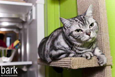 Брать ли на вечеринку… кота?/3821971_vech5 (460x307, 34Kb)