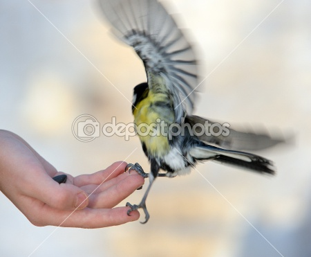 dep_1022506-Titmouse-on-a-hand. (450x371, 39Kb)