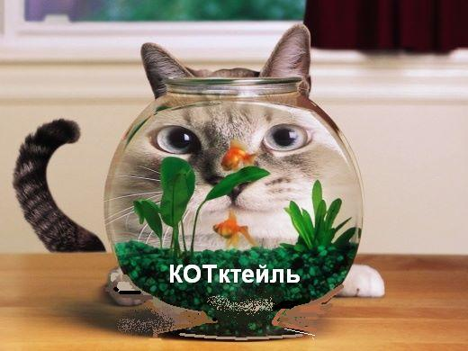 kotik-thumb (520x390, 39Kb)
