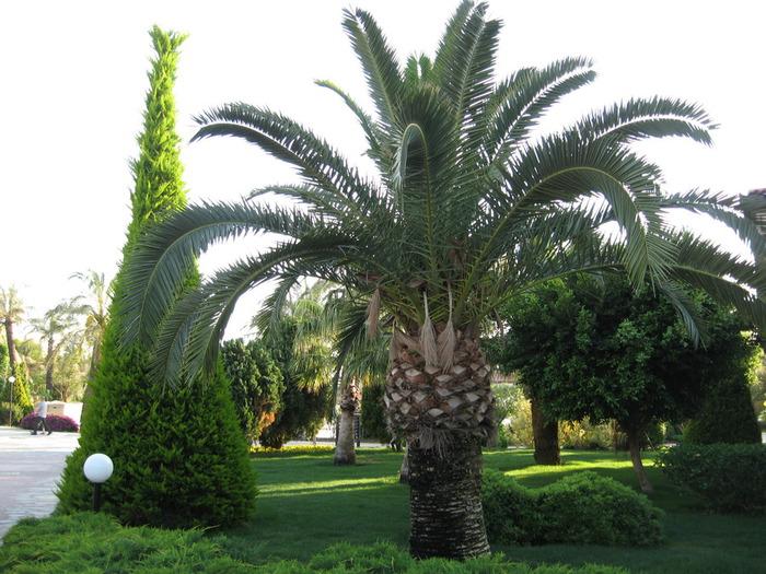 Турция 2011 141 (700x525, 149Kb)