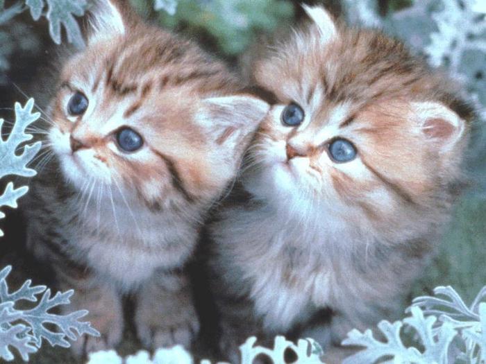 kitty203 (700x525, 57Kb)