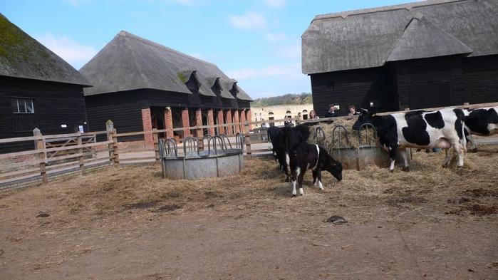 усадьба и ферма Вимпол Холл - Wimpole Hall 41224