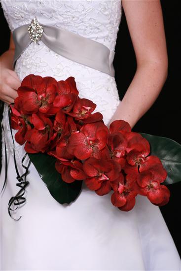 Орхидеи самое интересное в блогах
