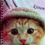 Превью 66215279_1288966687_kitten (150x150, 34Kb)