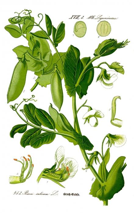 Этапы роста цветка в картинках 5