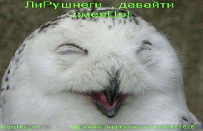 !16544528_sova (400x258, 25Kb)