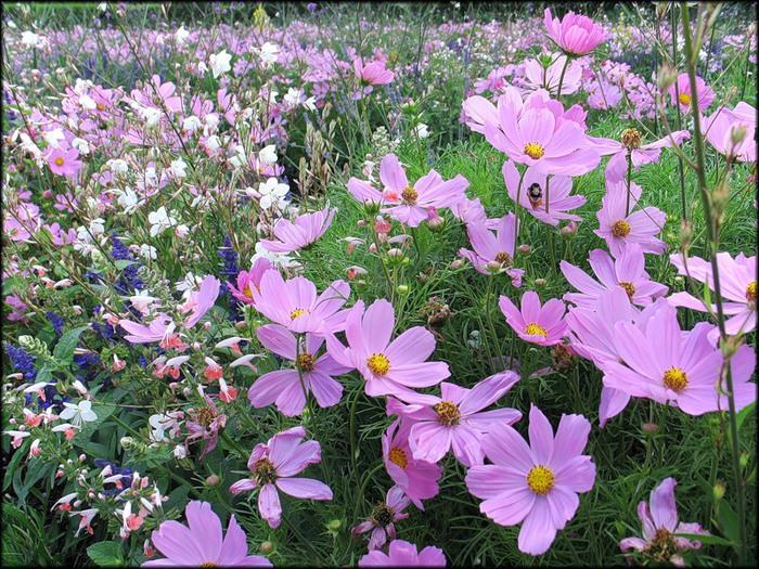 Lt b gt цветы lt b gt это тоже дети блог привет ру в