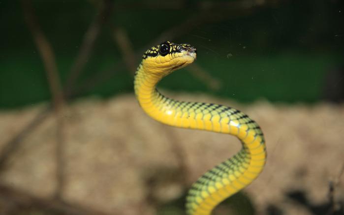 змея/4348076_8zmeya (700x437, 55Kb)
