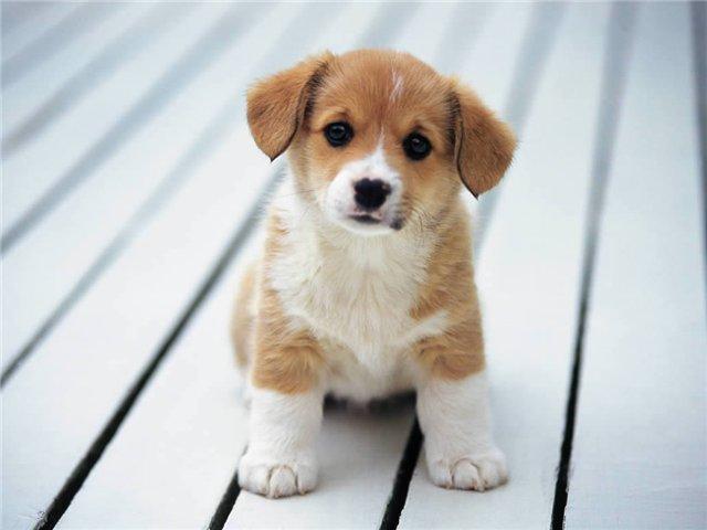 На остановке плачущий щенок,кого-то ищет среди...