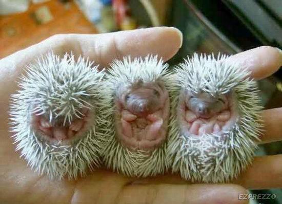 animal_babies10 (550x397, 39Kb)