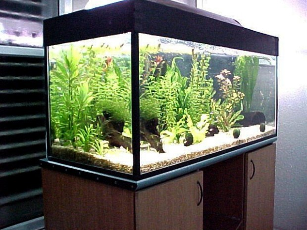 Я думаю каждый из вас хоть раз да и задумается о покупке аквариума.