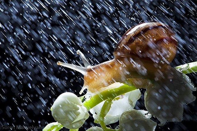 улитки, дождь