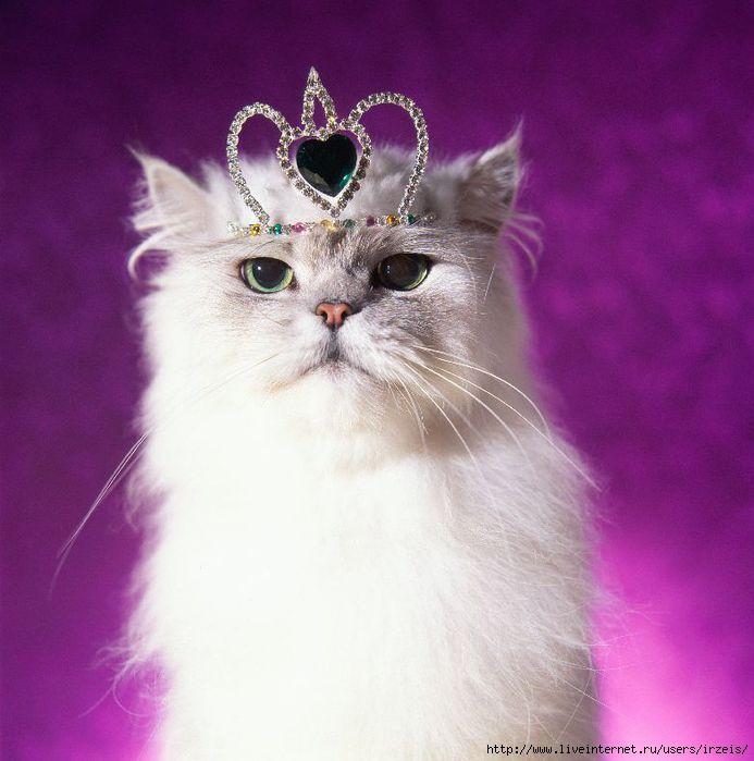 http://img1.liveinternet.ru/images/attach/c/3/75/33/75033311_3720816_cats_09.jpg