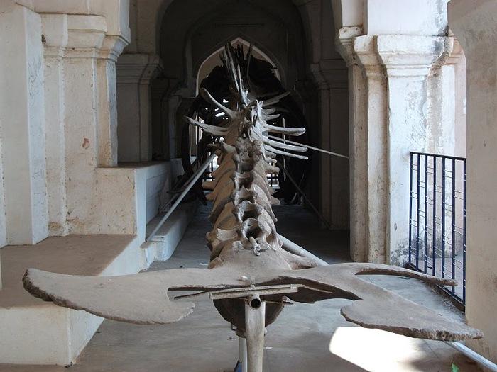 Танджавур - Дворец Наяков и музеи 36859
