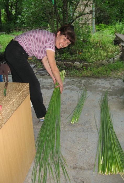 Когда заготавливать рогоз для плетения