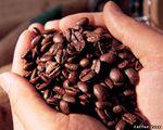 Превью Coffee-Beans-3- (500x400, 39Kb)