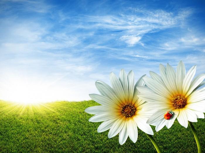 4403535_60989864_Nature_Flowers_Daisies_summer_grass_beetles_022623_ (700x525, 98Kb)
