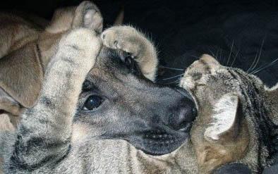 dog_cat (394x247, 31Kb)