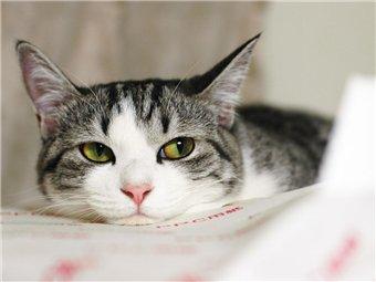 кошка (340x255, 14Kb)