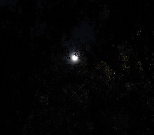 Луна 001-1 (505x443, 32Kb)