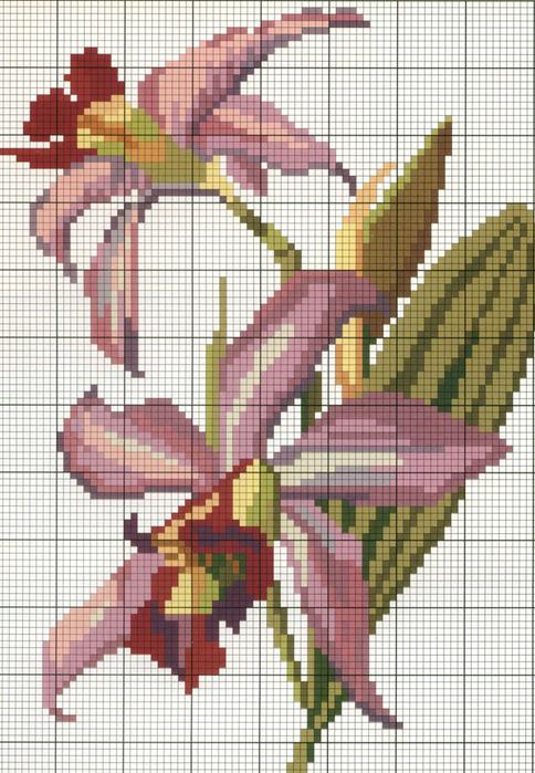 Вышивка. Орхидея Чудесные