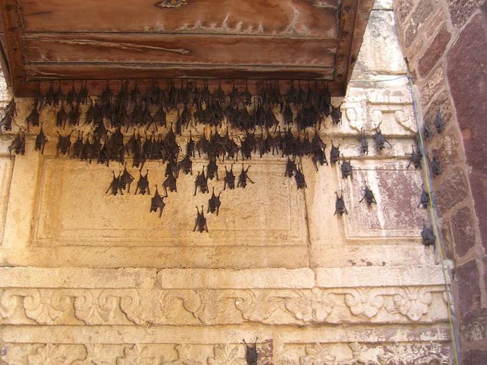 Крепость Мехрангарх - Mehrangarh fort, Jodhpur 58821