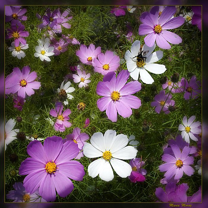 blue-violet-flower08 (700x700, 270Kb)