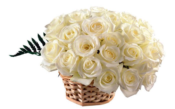 корзина белых роз (700x437, 58Kb)
