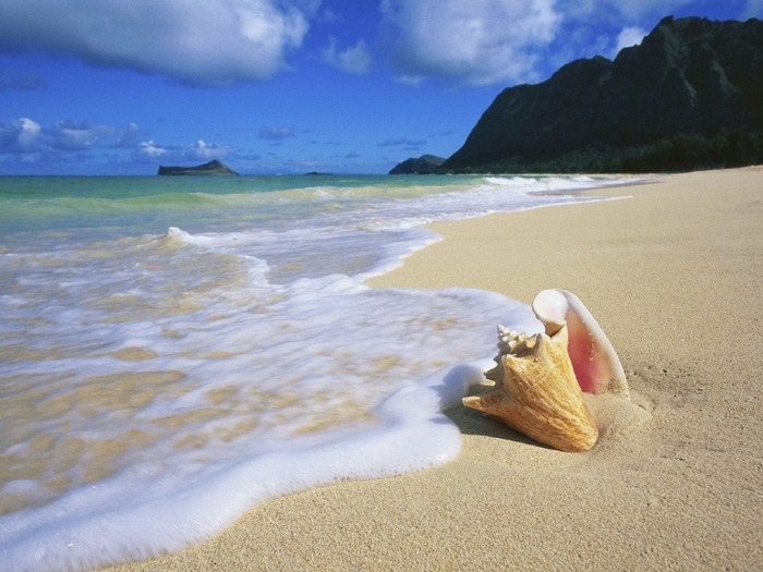 4276504_Conch_Shell_Oahu_Hawaii_1280x960 (700x525, 259Kb)