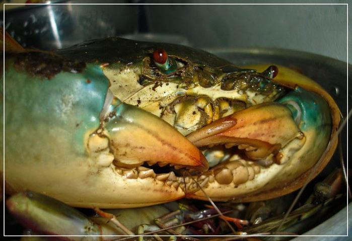 1279220980_sea-food-bali-1 (700x478, 114Kb)