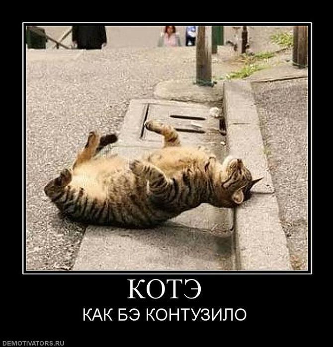 946905_kote (670x700, 68Kb)