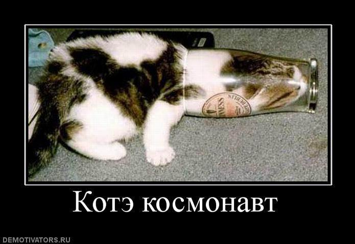 1294560520_727298_kote-kosmonavt (695x478, 58Kb)