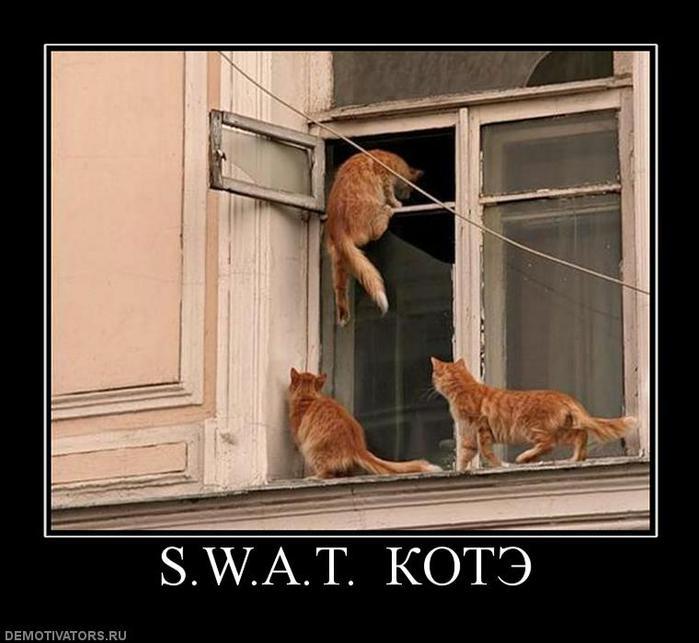 70882_swat-kote (700x643, 51Kb)