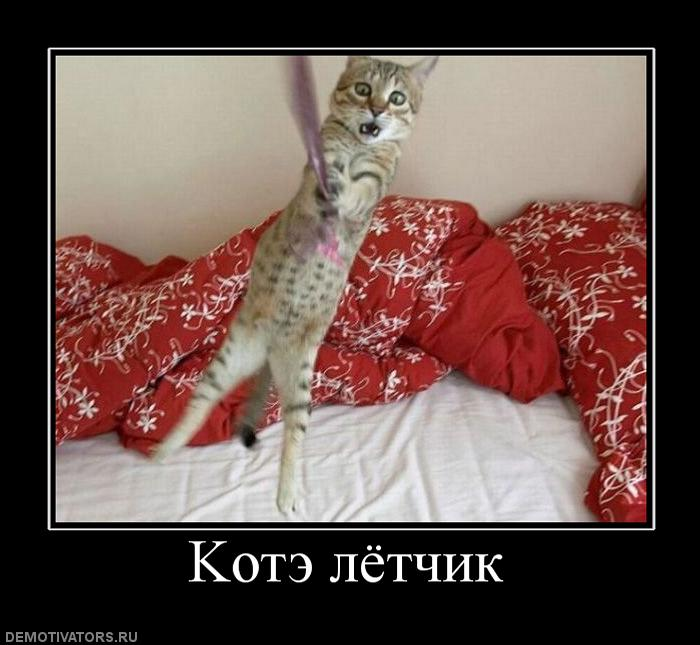 698150_kote-lyotchik (700x645, 56Kb)