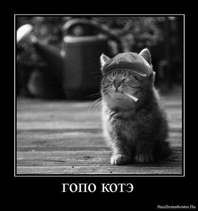 1269361936_485205_gopo-kote (659x700, 68Kb)