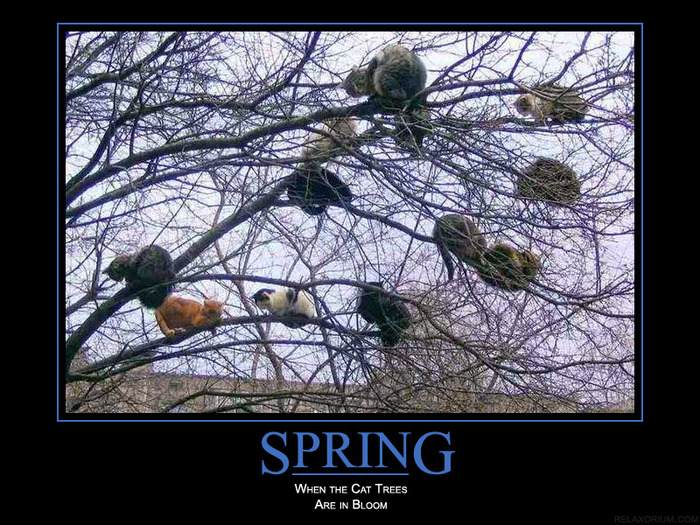 spring (700x525, 177Kb)