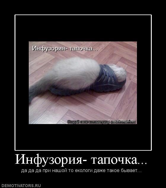 704227_infuzoriya-tapochka (560x635, 33Kb)