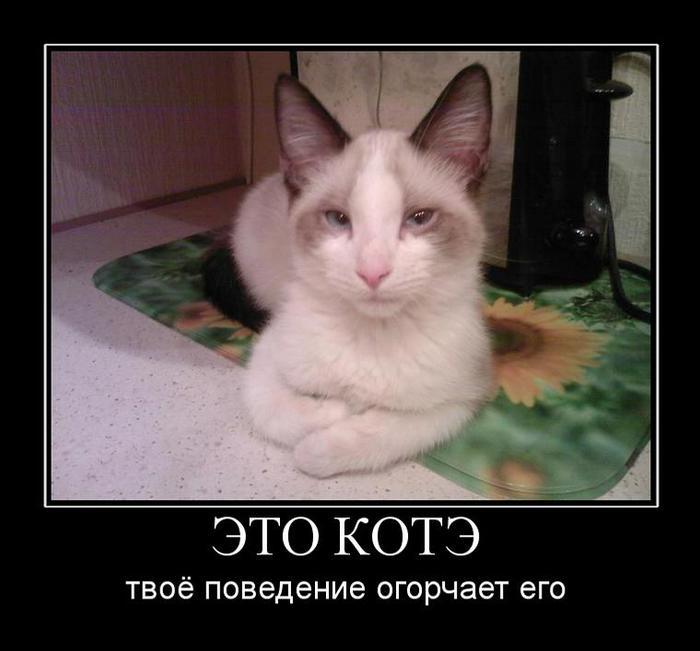 kote_1290440653 (700x651, 42Kb)