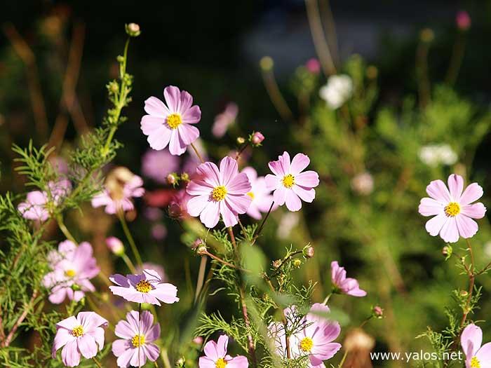 flowers2 (700x525, 49Kb)