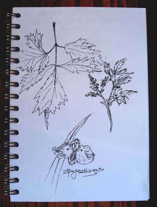 растения-2 (500x658, 264Kb)